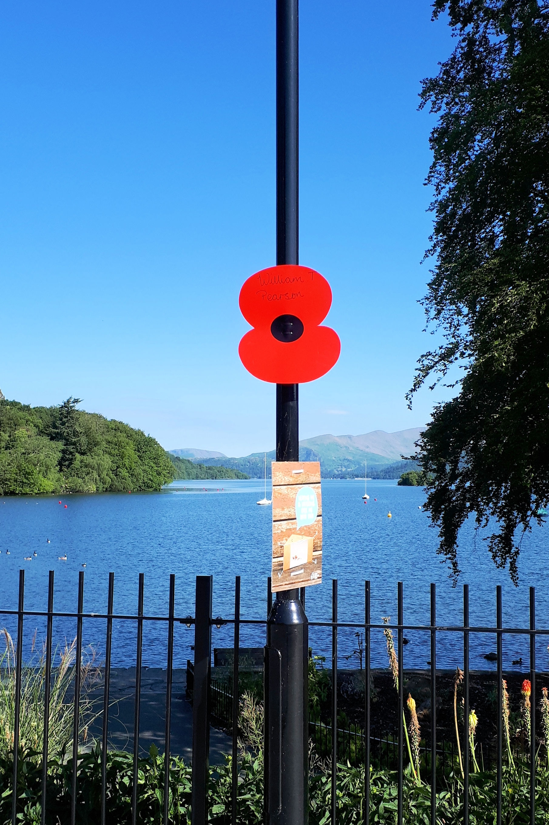 windermere_poppies